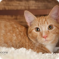 Adopt A Pet :: Little Bit - Eagan, MN