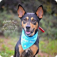 Adopt A Pet :: Jackson - Fort Valley, GA