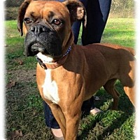 Adopt A Pet :: Ruby - Brentwood, TN