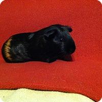 Adopt A Pet :: Jillian (Spayed) - Coral Springs, FL