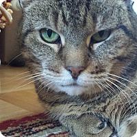 Adopt A Pet :: Rhonda - Toronto, ON