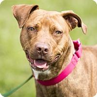 Adopt A Pet :: Dinah - Kettering, OH