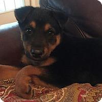 Adopt A Pet :: Electra - Morrisville, NC