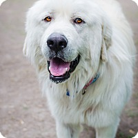 Adopt A Pet :: Big Nu - Houston, TX