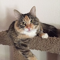 Adopt A Pet :: Puddin - Tempe, AZ