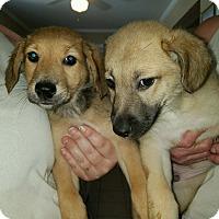 Adopt A Pet :: Tweedle Dee - Harmony, Glocester, RI