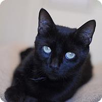 Adopt A Pet :: Nala - Everett, ON