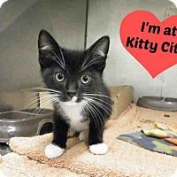 Adopt A Pet :: DAVEY - Fort Wayne, IN