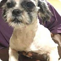 Adopt A Pet :: Moses - Sudbury, MA
