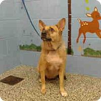 Australian Kelpie Mix Dog for adoption in San Bernardino, California - URGENT ON 10/20 San Bernardino
