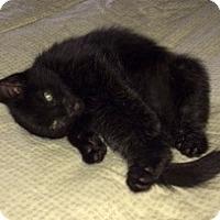 Adopt A Pet :: Fab Four - Fairfax, VA