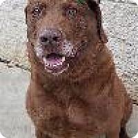 Adopt A Pet :: Otis - Queenstown, MD