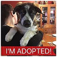 Adopt A Pet :: Ares - Regina, SK