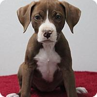 Adopt A Pet :: Sicily - Mobile, AL