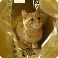 Adopt A Pet :: Snicklefritz - Fresno, CA