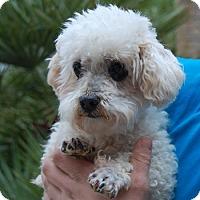 Adopt A Pet :: Forsyth - Las Vegas, NV