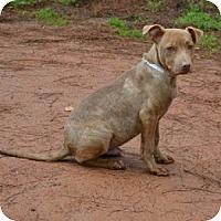 Adopt A Pet :: Rio - Athens, GA