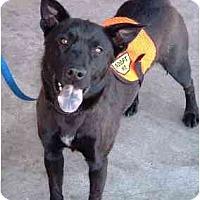 Adopt A Pet :: Tiki - Scottsdale, AZ