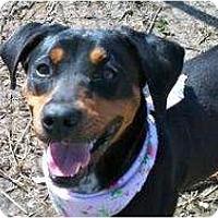 Adopt A Pet :: Petunia FUN GIRL  VERY SMART! - Antioch, IL