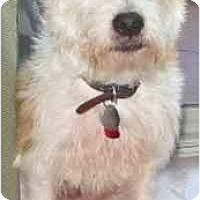Adopt A Pet :: RHUBARB - Phoenix, AZ