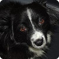 Adopt A Pet :: Jenny - La Habra Heights, CA