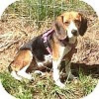 Adopt A Pet :: Anastasia - Novi, MI