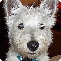 Adopt A Pet :: Andy-adoption pending - Omaha, NE