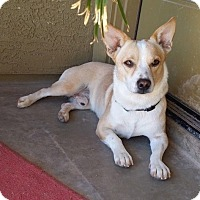 Adopt A Pet :: Marshall (Courtesy Listing) - Scottsdale, AZ