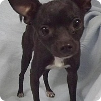 Adopt A Pet :: Echo - North Bend, WA