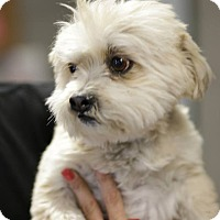 Adopt A Pet :: Denby - Phoenix, AZ
