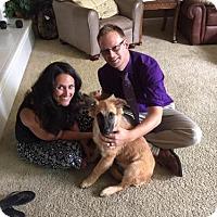 Adopt A Pet :: Winston - Sacramento, CA