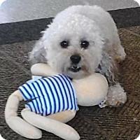 Adopt A Pet :: TEDDY - Boca Raton, FL