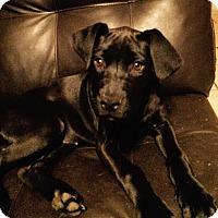 Adopt A Pet :: Zoey - Tampa, FL