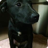 Adopt A Pet :: Marky - Burlington, NJ