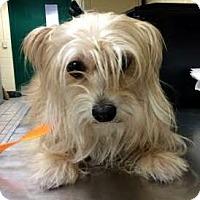 Adopt A Pet :: TIFFANY - Terra Ceia, FL