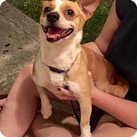 Adopt A Pet :: Toby (courtesy gemma) - Homestead, FL