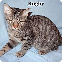 Adopt A Pet :: Rugby - Bentonville, AR