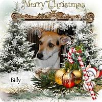 Adopt A Pet :: Billy - Crowley, LA