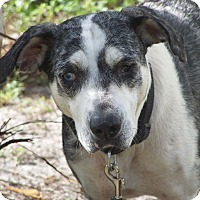 Adopt A Pet :: TIPPI - Odessa, FL