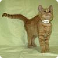 Adopt A Pet :: Kimba - Powell, OH