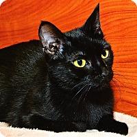 Adopt A Pet :: Velvet - Fairfax, VA