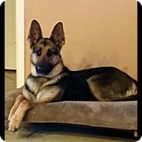 Adopt A Pet :: Freda - Houston, TX