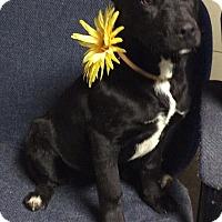 Adopt A Pet :: Lucy - Buffalo, NY