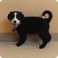 Adopt A Pet :: Jewels - Woodward, OK