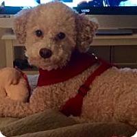 Adopt A Pet :: Reggie-courtesy - Royal Palm Beach, FL