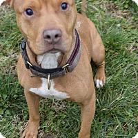 Adopt A Pet :: Barnaby - nashville, TN