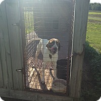 Adopt A Pet :: Duce- Illinois - Wood Dale, IL