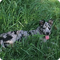 Adopt A Pet :: Maddie - Russellville, KY