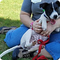 Adopt A Pet :: BEEZUS - Phoenix, AZ