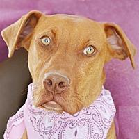 Adopt A Pet :: Darcy - Littlerock, CA